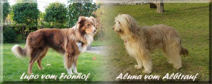 A-Luna vom Albtrauf-Lupo vom Fronhof