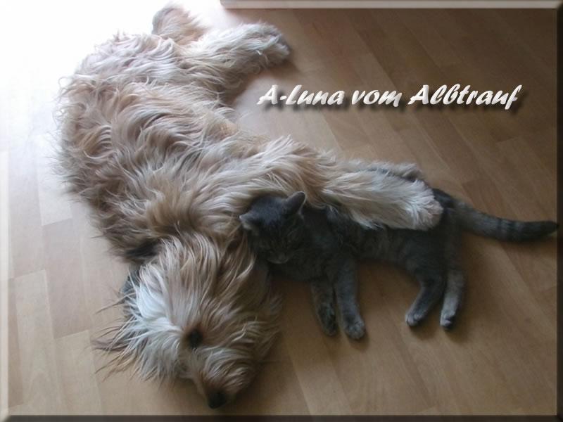 Luna wird bestimmt eine gute Welpenmama